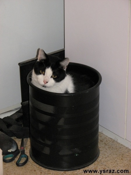 החתול בזבל